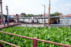 Ang Thong Farm Cross River Ferry Pier, Pak Kret, Nonthaburi.