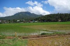 Risfält med vackra berg i bakgrunden finns överallt på Biliran.