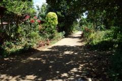 På väg till Sampao Rice Terraces passerar jag här en liten by med vackra blommor i husens trädgårdar, Biliran.