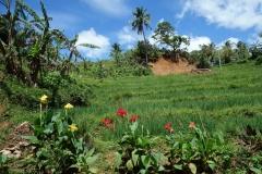 Längs vägen uppe i bergen på väg till Sampao Rice Terraces, Biliran.