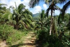 På väg ner till Bagongbong Falls, Biliran.