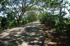 Allé längs vägen till Lake Danao, Pacijan island.