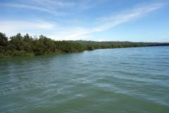 Mangroveskog mellan Pacijan och Poro islands.