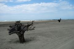 Inani beach, Cox's Bazar.