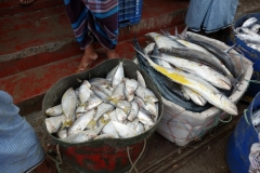 Fiskmarknad i Gorakghata, Maheskhali island.