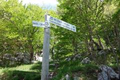 Vandringen upp till Mount Dajti.