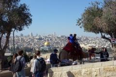 Kamelridning med utsikt över Tempelberget från Olivberget, Jerusalem.