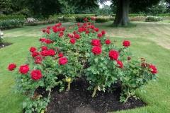 Rose Garden, Greenwich Park.