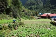 Byn Bengkar mellan Monjo och Phakding.