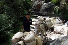 Sherpa med åsnor på väg mot högre höjder, strax innan Phakding.