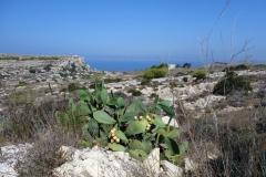 Karg men vacker natur. Vandringen till Fomm ir-Riħ Bay.