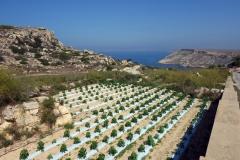 Vandringen till Fomm ir-Riħ Bay.