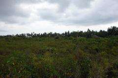 Landskapet längs huvudvägen som går en bit in från Matemwe Beach, Unguja.