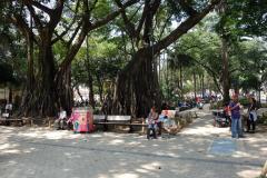 Parque Bolívar, Medellín.