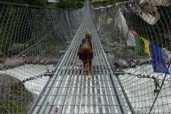 Min fina vän på väg över hängbron över Dudh Kosi en bit söder om Monjo.