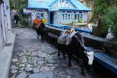 Lilla byn Jorsale en bit norr om Monjo.