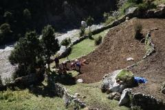 Lokalbefolkningen i arbete i Pangboche (3930 m).