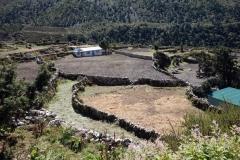 Odlingar med bovete i Pangboche (3930 m).