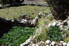 Bybo jobbar med sin odling i Pangboche (3930 m).