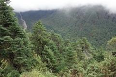 Naturen på vandringen utför branten från Tengboche ner mot Phunki Tenga.
