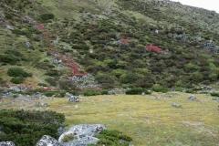 Vacker natur i Pheriche-dalen.