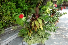 Växter vid Phnom Mondap, Royal Palace, Phnom Penh.