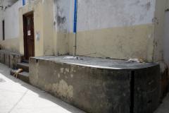 Kattvila i Stone Town (Zanzibar Town), Unguja.