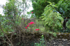 Naturen i omgivningarna kring Kizimkazi, Unguja.