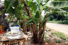 Bananträd vid kassan till en liten bybutik, Fumba, Unguja