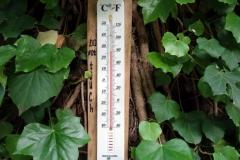 En varm försommardag i botaniska trädgården, Tbilisi.
