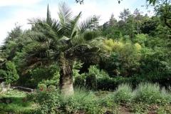 Botaniska trädgården, Tbilisi.