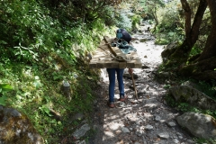 Sherpa som bär virke längs EBC-trekken uppför den kraftiga stigningen från Phunki Tenga upp mot Tengboche.