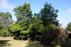 Trädgården på Hostal Renacer, Villa de Leyva.