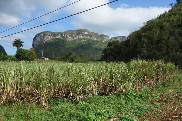 Efter en dryg timmes promenad börjar rätt så höga mogotes (kalkstensberg) omge mig, Valle de Viñales.