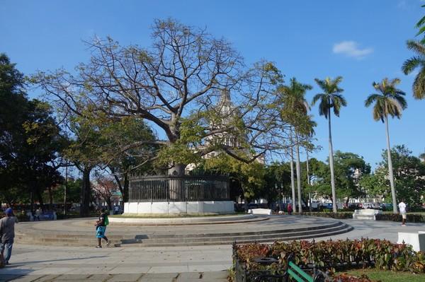 Parque de la Fraternidad med Capitolio Nacional i bakgrunden, Centro Habana, Havanna.