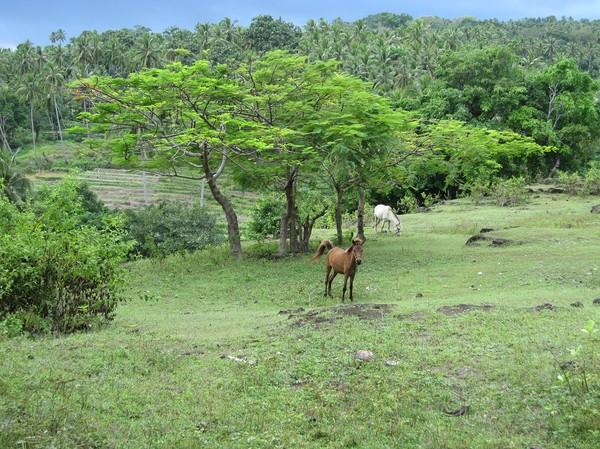 Promenaden från Baucau old town ner till Wataboo beach, Osolata, Baucau, Timor-Leste.