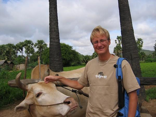 Stefan med buffeln som driver på tillverkningen av jordnötsolja längs vägen till mount Popa.