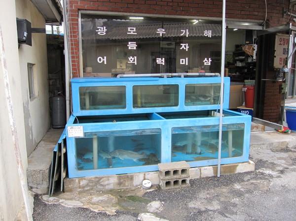 Seafood restaurang Sokcho.