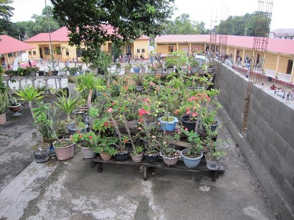 Krukväxtsamlingen på Restaurante Amalia, Baucau old town, Timor-Leste.