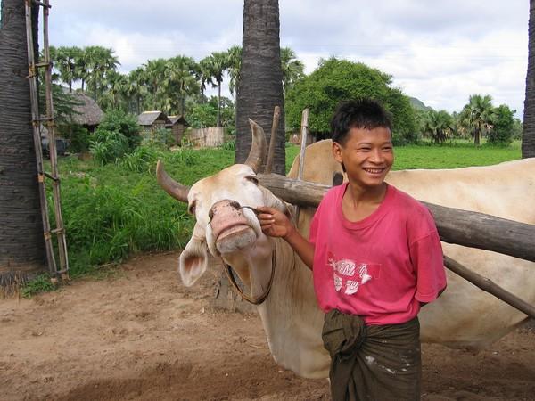 Jag skämtar med burmesen och försöker förklara att jag vill testa att dra axeln runt för hand via gester och teckenspråk. Tillverkning av jordnötsolja längs vägen till mount Popa.