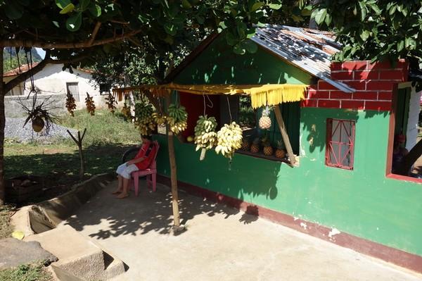 Fruktaffär där det blev köp av bananer, Valle de Viñales.