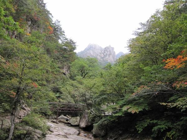 Naturen i närheten av vattenfallet.