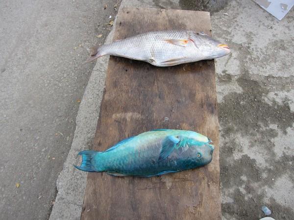 Fiskförsäljning centrala Dili.