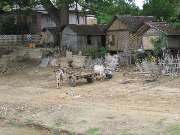 Landsbygdsliv längs Ayeyarwaddy River.