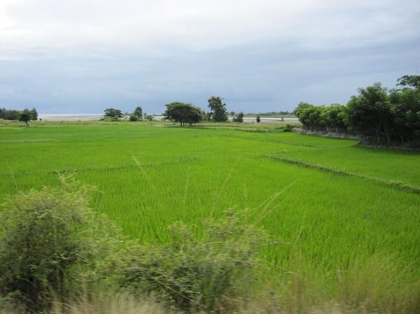Ett av få risfält jag såg mellan Dili och Baucau. Det finns inte mycket odlingsbar mark i Timor-Leste. Mycket livsmedel skickas in via hjälpsändningar.
