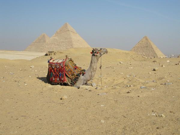 När jag kom över en av sanddynorna hittade jag en herrelös kamel. Det utmynnade i ett bra fototillfälle!