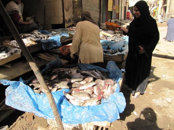 Försäljning av fisk i islamic Cairo, Kairo. Fiskarna är inte prickiga. Det är flugor på dem!