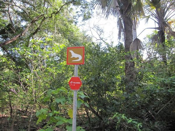 Varning för Komodovaraner! Komodo island.