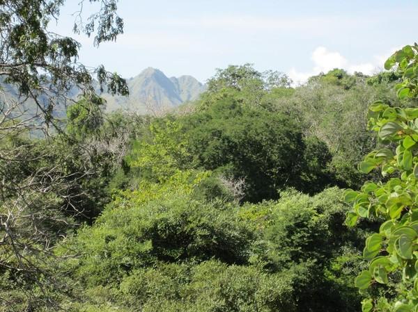 Naturen på Komodo är fantastiskt fin, Komodo island.