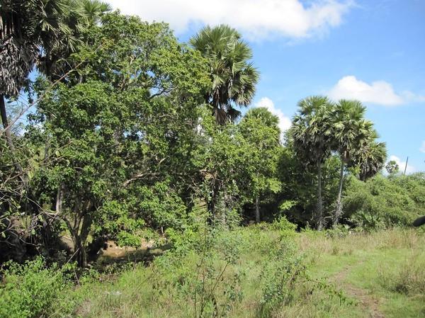 Landskapet på Rinca är savannliknande. Rinca island.